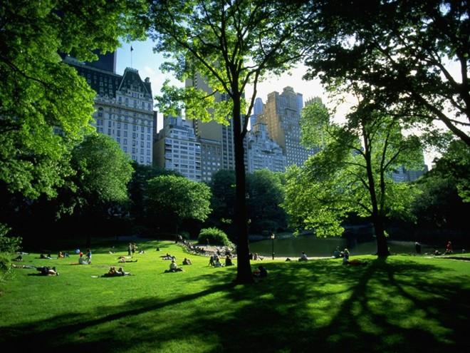 Trồng cây xanh cải thiện không khí