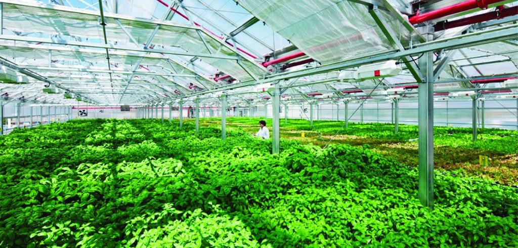 Sản xuất nông nghiệp quy mô lớn